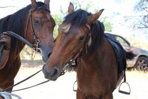 Calabria-cavalli